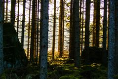 Forrest Royalty Free Stock Photography