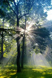 Forrest sun lights Royalty Free Stock Photography