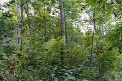 Forrest-Szene im Herbst an einem regnerischen Tag Stockbild