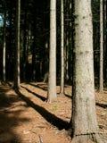 Forrest tchèque Photographie stock libre de droits