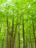 Forrest träd Royaltyfria Bilder