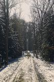 Forrest track through the forrest of St. Poelten in winter season. Picture shows the forrest track through the forrest of St. Poelten in winter season Royalty Free Stock Images