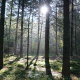 forrest tree sun sky nature royalty free stock images