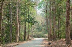 Forrest tropical Imagen de archivo libre de regalías