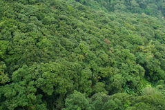 Forrest tropical image libre de droits