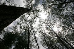 Forrest tropicale Fotografia Stock