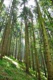 Forrest vert Images libres de droits