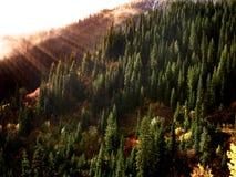 Forrest w jesieni z mgłą i światłem słonecznym Zdjęcie Royalty Free
