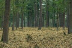 Forrest w jesieni z specjalnym nastrojem fotografia royalty free