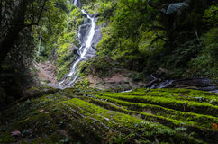 The Forrest waterfall Stock Image