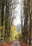 Forrest Weg Stockfoto