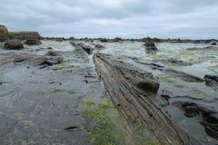 Forrest werd van angst verstijfd hout op een strand royalty-vrije stock fotografie