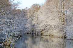 Forrest in winter time Royalty Free Stock Photography