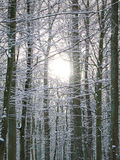 Forrest in winter time Royalty Free Stock Images