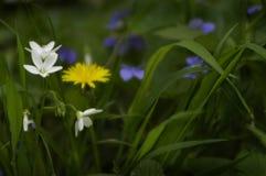 Forrest wiosny kwiaty Obrazy Stock