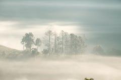 Forrest y niebla en el dao de Chiang, Chiangmai, Tailandia Foto de archivo libre de regalías