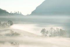 Forrest y niebla en el dao de Chiang, Chiangmai, Tailandia Fotografía de archivo libre de regalías