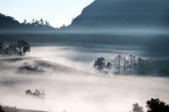 Forrest y niebla en el dao de Chiang, Chiangmai, Tailandia Foto de archivo
