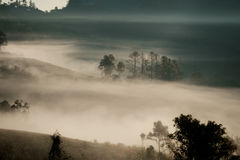 Forrest y niebla en el dao de Chiang, Chiangmai, Tailandia Fotos de archivo libres de regalías