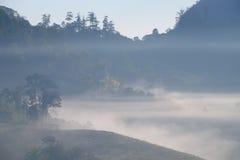 Forrest y niebla en el dao de Chiang, Chiangmai, Tailandia Fotos de archivo