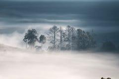 Forrest y niebla en el dao de Chiang, Chiangmai, Tailandia Imagenes de archivo