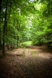 Forrestgang Royalty-vrije Stock Fotografie