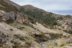 Fors i ström för infödingBush berg Arkivfoto