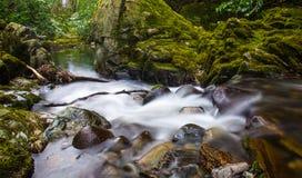 Forsar på Tollymore Forest Park Arkivbilder