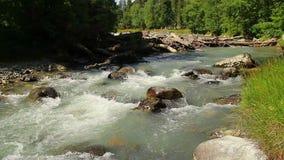 Forsar & stort träig skräp i bergströmmen, turbulent vatten stock video
