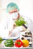 Forscher, der ein GVO-Gemüse hält Stockfotos