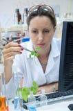 Forscher hält Blatt an Stockbild