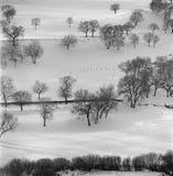 Forse del invierno Imágenes de archivo libres de regalías