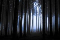 Forset στην ομίχλη στοκ εικόνα με δικαίωμα ελεύθερης χρήσης