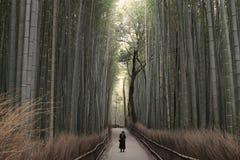 Forset de bambú extendió Imagen de archivo libre de regalías