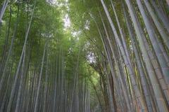 Forset di bambù Fotografia Stock