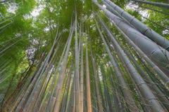 Forset di bambù Fotografia Stock Libera da Diritti