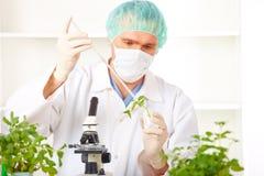 forskare för växt för gmo-holdinglaboratorium upp Arkivbilder