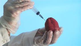 Forskare Injects Strawberry med en injektionsspruta arkivfilmer