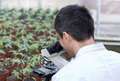 Forskare med mikroskopet i grönt hus Royaltyfri Bild