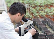 Forskare med mikroskopet i grönt hus Royaltyfri Foto