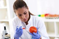Forskare som sätter den nya prövkopian till tomaten och gör ny forskning Royaltyfria Foton