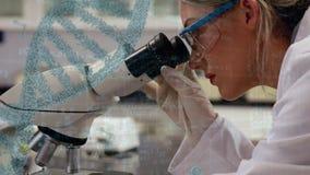 Forskare som in ser till ett mikroskop arkivfilmer