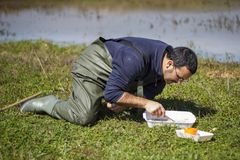 Forskare som sorterar biologiska netto prövkopior på en våtmark fotografering för bildbyråer