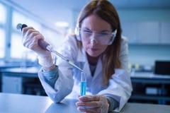 Forskare som spolar ren kemikalien in i provröret Royaltyfri Fotografi