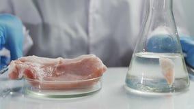 Forskare som studerar prövkopian av konstgjort kött i modernt laboratorium arkivfilmer