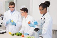 Forskare som undersöker grönsaker Fotografering för Bildbyråer