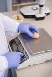 Forskare som väger potatisar Royaltyfri Fotografi