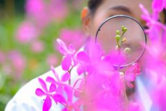 Forskare tar förstoringsglaset för att skina purpurfärgade orkidér arkivbilder
