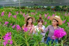 Forskare unga kvinnor som bär vita klänningar och orkidéträdgårdägare, samarbetar för att kontrollera orkidér och spara ändringar royaltyfri bild