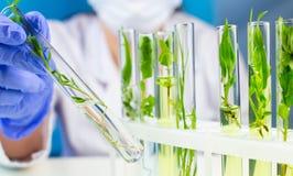 Forskarehållprovrör med växten inom i laboratorium arkivbild